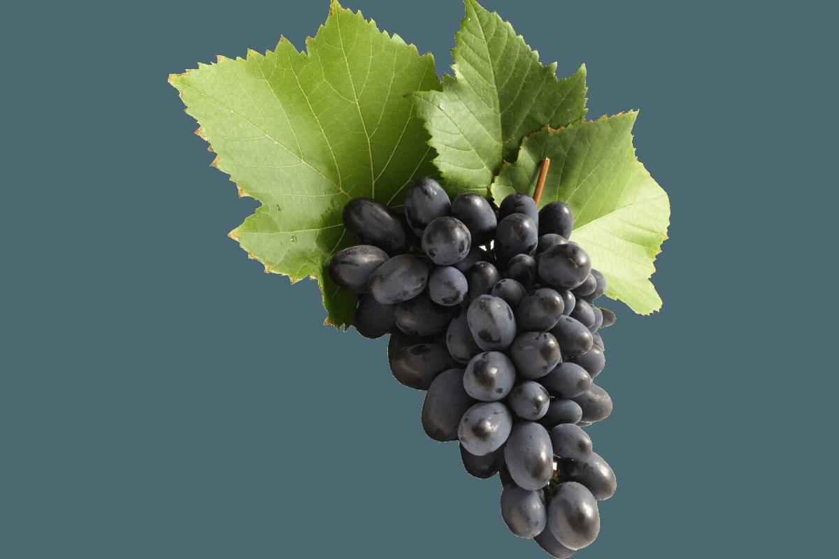 Kékszőlő