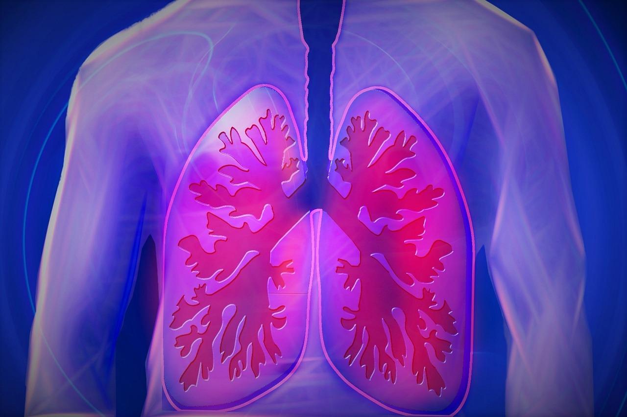 A tüdőnek is vannak saját baktériumai, támogassuk őket!